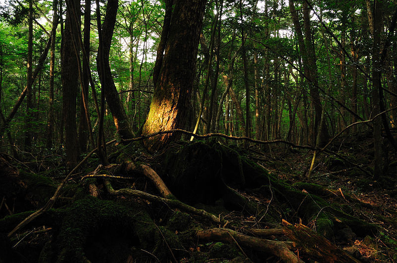 800px-aokigahara_forest_01
