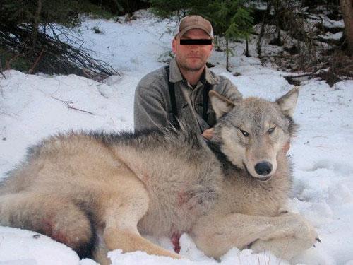 wolf9Mile